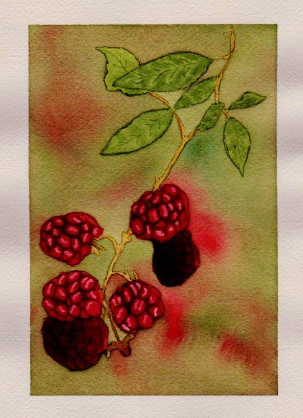 raspberry study 1